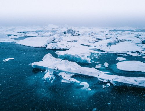 How Can YOU Protect The Arctic?